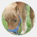 Shetland Pony Stickers