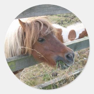 Shetland Pony Stickers (5019)