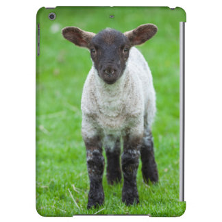 Shetland Sheep 4 Case For iPad Air