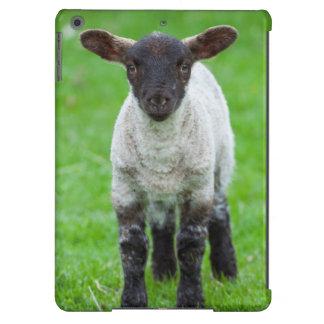 Shetland Sheep 4 iPad Air Cover