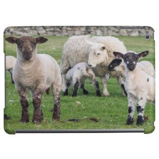 Shetland Sheep 5 Cover For iPad Air