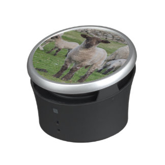 Shetland Sheep 5 Speaker