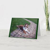 Shetland Sheep Dog or Sheltie greeting, note card