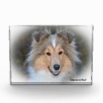 Shetland Sheep Dog. Photo Block
