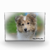 Shetland Sheep Dog Photo Block