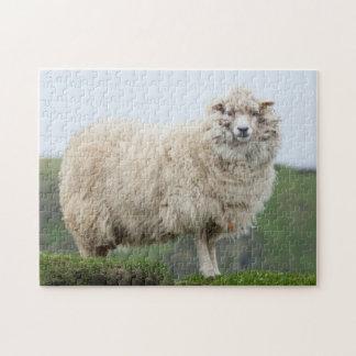 Shetland Sheep Jigsaw Puzzle