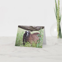 Shetland Sheep Notecard