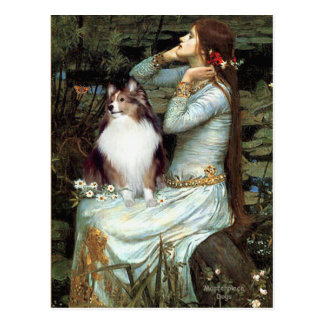 Shetland Sheepdog 18 - Ophelia Seated Postcard