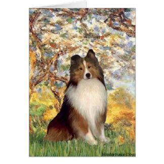 Shetland Sheepdog 1 - Spring Card