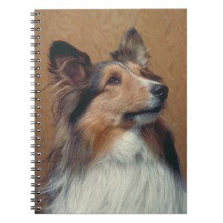 Shetland Sheepdog Dog Notebook