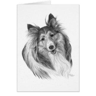 Shetland Sheepdog Drawing by Glenda S. Harlan Card