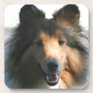 Shetland Sheepdog Drink Coaster