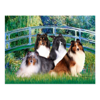 Shetland Sheepdog (four) - Bridge Postcard