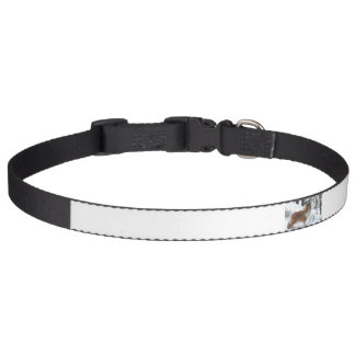 shetland sheepdog full.png pet collar