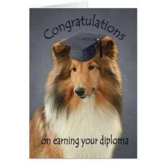 Shetland Sheepdog Graduation Card