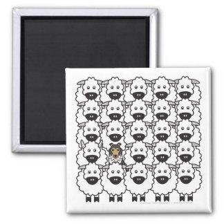 Shetland Sheepdog in the Sheep Magnet