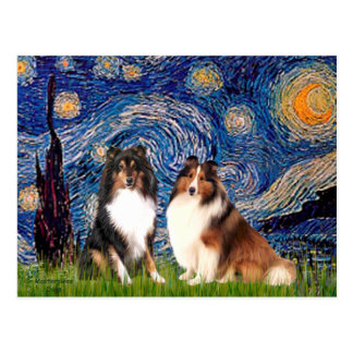 Shetland Sheepdog Pair - Starry Night Postcard