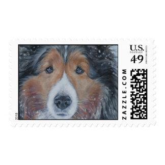 Shetland Sheepdog postage stamp
