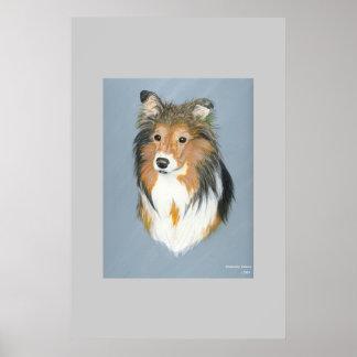 Shetland Sheepdog  Posters