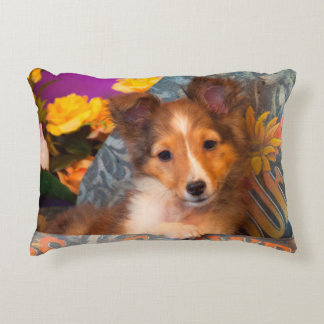 Shetland Sheepdog puppy in a hat box Accent Pillow