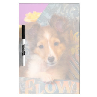 Shetland Sheepdog puppy in a hat box Dry Erase Board