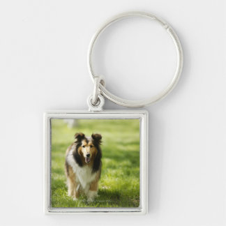 Shetland Sheepdog running on the grass Silver-Colored Square Keychain