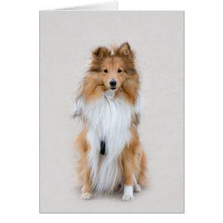 Shetland Sheepdog sheltie dog blank note card