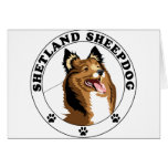Shetland Sheepdog - Sheltie Greeting Card