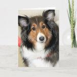 Shetland Sheepdog (Sheltie) Greeting/Note Cards