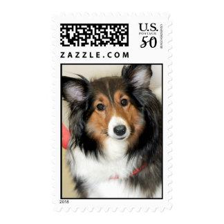 Shetland Sheepdog (Sheltie) Postage Stamps