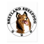 Shetland Sheepdog - Sheltie Postcard