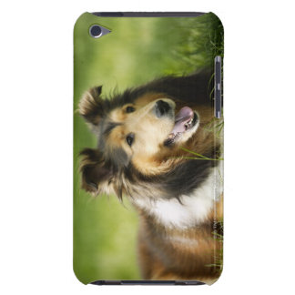 Shetland Sheepdog sitting on the grass iPod Touch Case-Mate Case