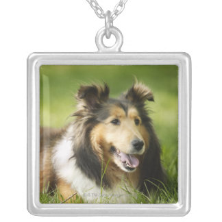 Shetland Sheepdog sitting on the grass Silver Plated Necklace