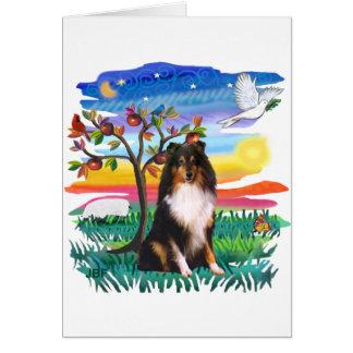 Shetland Sheepdog (tri) Greeting Card