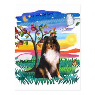 Shetland Sheepdog (tri) Postcard