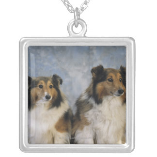 Shetland Sheepdogs Silver Plated Necklace