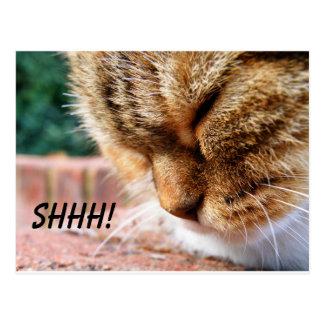 Shh Cat Postcard