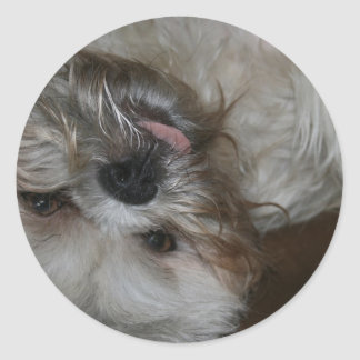 shi tzu puppy dog adorable cute photo stickers