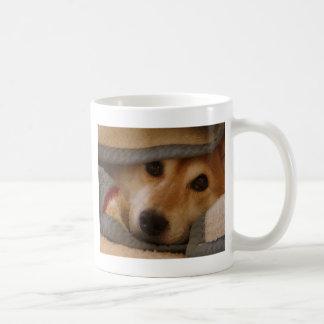 Shiba en una taza combinada