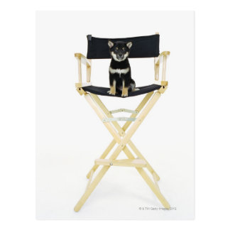 Shiba Inu dog on director's chair Postcard