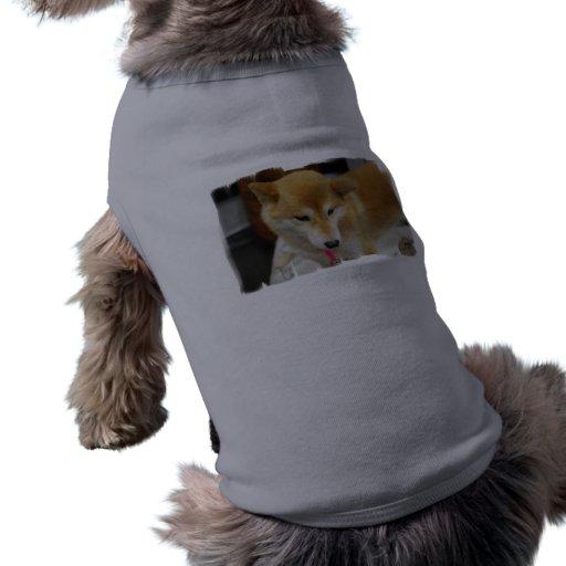 Shiba Inu Dog  Pet Shirt