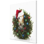 Shiba Inu dog wearing Santa hat sitting in Canvas Print