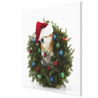 Shiba Inu dog wearing Santa hat sitting in Canvas Print