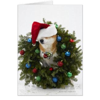 Shiba Inu dog wearing Santa hat sitting in Greeting Card