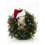 Shiba Inu dog wearing Santa hat sitting in Postcard