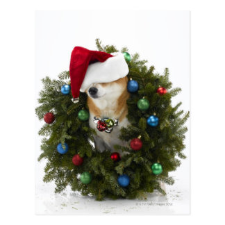 Shiba Inu dog wearing Santa hat sitting in Postcard
