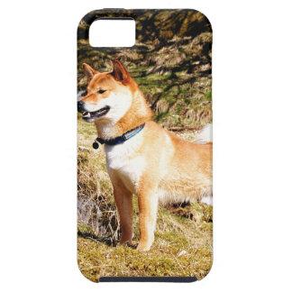 Shiba Inu Funda Para iPhone SE/5/5s