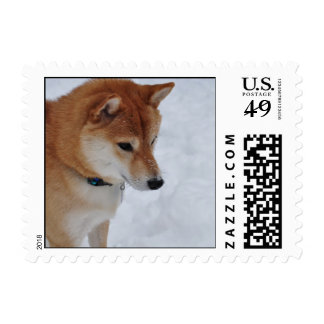 Shiba Inu in the Snow Postage Stamp