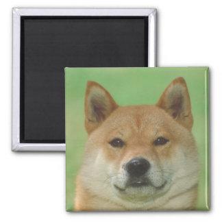 Shiba Inu Magnet