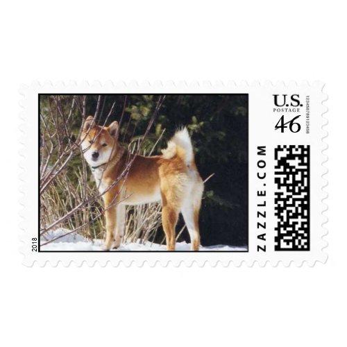 Shiba inu stamp